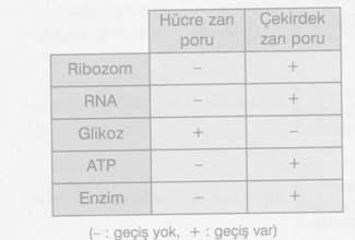 9-Sınıf-Biyoloji-Hucre-Zarindan-Madde-Gecisleri-Testleri 6.