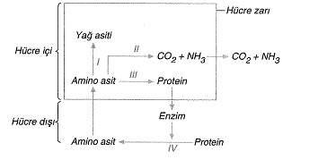 9-sinif-biyoloji-testleri-63.