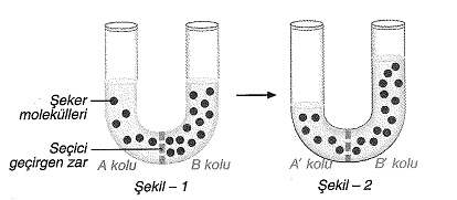 Sınıf biyoloji hücre zarı ve madde geçişi testleri 4