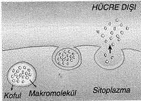 9-sinif-biyoloji-testleri-82.