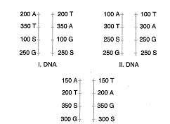 11.sinif-biyoloji-dnanin-yapisi-ve-replikasyon-testleri-1.