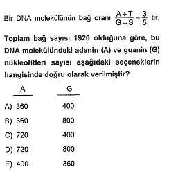 11.sinif-biyoloji-dnanin-yapisi-ve-replikasyon-testleri-8.