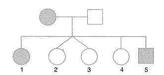 11.sinif-biyoloji-genetik-testleri-1.