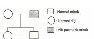 8.Sinif-Fen-Ve-Teknoloji-Hucre-Bolunmeleri-ve-Kalitim-Testleri-7-Optimized