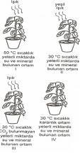 8.Sinif-Fen-ve-Teknoloji-Canlilar-ve-Enerji-Iliskileri-Testleri-9-Optimized