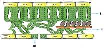 lys-ygs-biyoloji-canlilar-testleri-52.