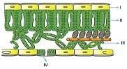 lys-ygs-biyoloji-canlilar-testleri-53.
