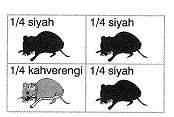 ygs-biyoloji-kalitim-testleri-2.