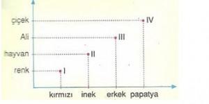 6.-Sinif-Turkce-sozcukte-anlam-testleri-11