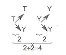7-sinif-matematik-olasilik-konu-anlatimi-2