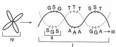 8-sinif-fen-bilimleri-dna-adaptasyon-ve-evrim-test-13