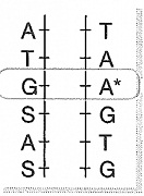 8-sinif-fen-bilimleri-dna-adaptasyon-ve-evrim-test-8
