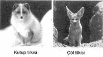 8-sinif-fen-bilimleri-dna-adaptasyon-ve-evrim-test-9