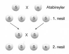 8-sinif-fen-bilimleri-kalitim-test-1