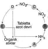8-sinif-fen-bilimleri-canlilar-ve-enerji-14-optimized