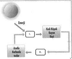 8-sinif-fen-bilimleri-canlilar-ve-enerji-15-optimized