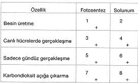 8-sinif-fen-bilimleri-canlilar-ve-enerji-15