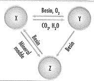 8-sinif-fen-bilimleri-canlilar-ve-enerji-17-optimized