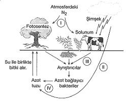 8-sinif-fen-bilimleri-canlilar-ve-enerji-23