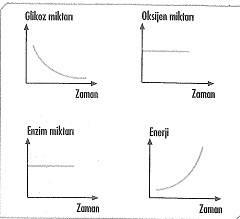 8-sinif-fen-bilimleri-canlilar-ve-enerji-24-optimized