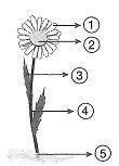 8-sinif-fen-bilimleri-deneme-sinavi-121
