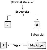 8-sinif-fen-bilimleri-deneme-sinavi-122