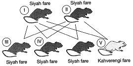8-sinif-fen-bilimleri-deneme-sinavi-133