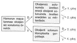 8-sinif-fen-bilimleri-deneme-sinavi-145
