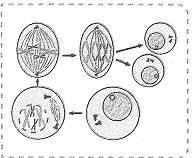 8-sinif-fen-bilimleri-hucre-bolunmesi-ve-kalitim-cozumlu-1-optimized