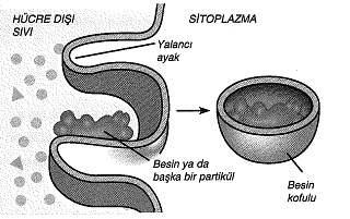 9-sinif-biyoloji-testleri-74.