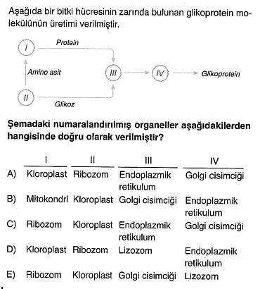 9-sinif-biyoloji-testleri-89.