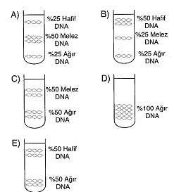 11.sinif-biyoloji-dnanin-yapisi-ve-replikasyon-testleri-10.