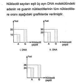 11.sinif-biyoloji-dnanin-yapisi-ve-replikasyon-testleri-2.
