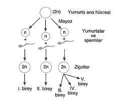 11.sinif-biyoloji-genetik-testleri-16.