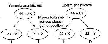 11.sinif-biyoloji-genetik-testleri-18.