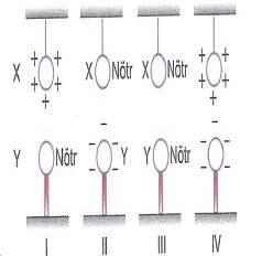 lys-fizik-madde-ozellikleri-testleri-450.