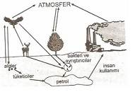 8.Sinif-Fen-ve-Teknoloji-Canlilar-ve-Enerji-Iliskileri-Testleri-20-Optimized