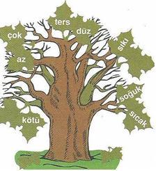 6.-Sinif-Turkce-sozcukte-anlam-testleri-13