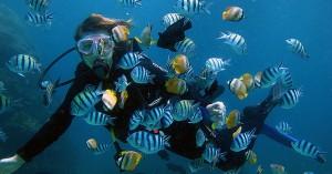 beginner-diver1