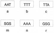 8-sinif-fen-bilimleri-dna-adaptasyon-ve-evrim-test-4