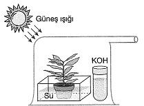8-sinif-fen-bilimleri-besin-zincirindeki-canlilar-13