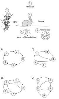 8-sinif-fen-bilimleri-besin-zincirindeki-canlilar-16