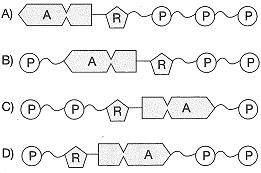 8-sinif-fen-bilimleri-besin-zincirindeki-canlilar-4