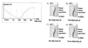 8-sinif-fen-bilimleri-canlilar-ve-enerji-11-optimized
