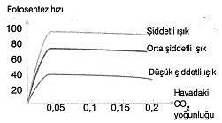 8-sinif-fen-bilimleri-canlilar-ve-enerji-13-optimized