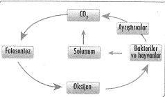 8-sinif-fen-bilimleri-canlilar-ve-enerji-29-optimized