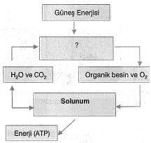 8-sinif-fen-bilimleri-canlilar-ve-enerji-7-optimized