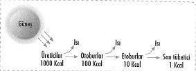 8-sinif-fen-bilimleri-canlilar-ve-enerji-cozumlu-10-optimized