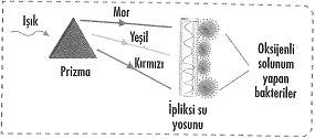 8-sinif-fen-bilimleri-canlilar-ve-enerji-cozumlu-5-optimized