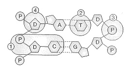8-sinif-fen-bilimleri-deneme-sinavi-144